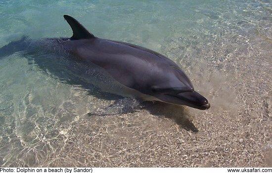 a dolphin on a beach